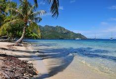 Plage sur Moorea, Tahiti images stock