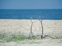 Plage tropicale à l'arrière-plan de vacances d'été Images libres de droits
