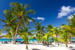 Plage tropicale, île de Saona, Photo stock