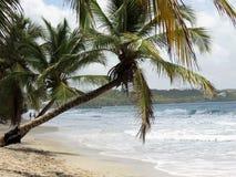 Plage tropicale Image libre de droits