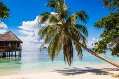 Plage tropicale arénacée blanche en Maldives Photographie stock
