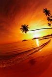 Plage tropicale au coucher du soleil Photographie stock libre de droits