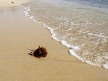 Plage tropicale avec à sable jaune et des algues, Cap Vert Photos libres de droits