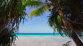 Plage tropicale avec des cocopalms en Polynésie française banque de vidéos
