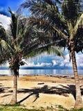 Plage tropicale avec des palmiers Photographie stock libre de droits