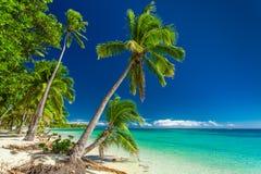 Plage tropicale avec des palmiers sur les îles fidji Images libres de droits