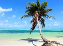 Plage tropicale avec le cocotier image stock
