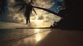 Plage tropicale avec le palmier Palmiers sur la plage sablonneuse banque de vidéos