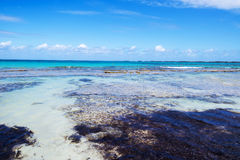 Plage tropicale : Crystal Clear Water image stock