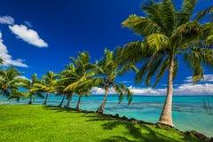 Plage tropicale de côté nord d'île du Samoa avec des palmiers Image libre de droits