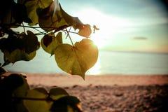 Plage tropicale de coucher du soleil Beau fond image stock