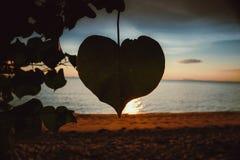 Plage tropicale de coucher du soleil Beau fond photographie stock libre de droits