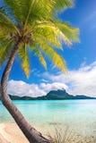plage tropicale de palmier Photographie stock libre de droits