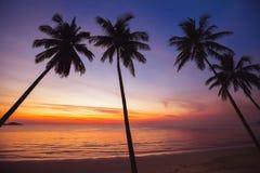 Plage tropicale de paradis au coucher du soleil, paysage exotique Photographie stock
