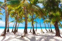 Plage tropicale de sable avec des palmiers, vacances d'été Photographie stock