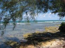 Plage tropicale des Caraïbes Photographie stock