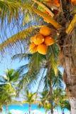 Plage tropicale des Caraïbes de palmiers de noix de coco Image stock