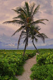 Plage tropicale et vide, Miami Beach Image stock
