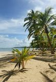 Plage tropicale normale Image stock