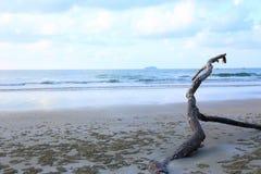 Plage tropicale panoramique avec branches brunes Photographie stock
