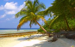 Plage tropicale rêveuse avec les palmiers et l'oiseau Photo stock