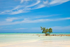 Plage vide sur l'île de Havelock Images libres de droits