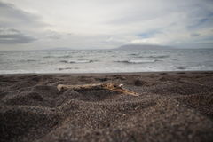 Plage volcanique de sable de noir d'Hawaï Image stock