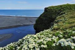 Plage volcanique noire de sable chez Dyrholaey, Islande Photos libres de droits