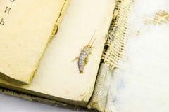 Plagebücher und -zeitungen Insekt, das auf Papier - Silberfischchen einzieht Stockbilder