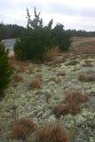 Plages sablonneuses couvertes de lichens, Etats-Unis Photo libre de droits
