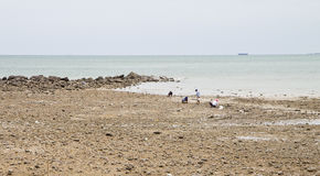 Plages, zones rocheuses et mer. Image stock