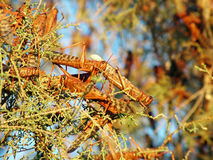 Plague of Locusts Stock Images
