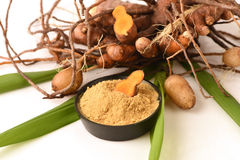 Plai (thai name), Cassumunar ginger, Bengal root Zingiber cassumunar, fresh and powdered rhizome Stock Images
