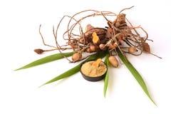 Plai (thai name), Cassumunar ginger, Bengal root Zingiber cassumunar, fresh and powdered rhizome Stock Images