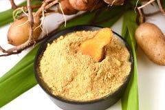 Plai (thai name), Cassumunar ginger, Bengal root Zingiber cassumunar, fresh and powdered rhizome Royalty Free Stock Photography