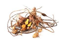 Plai (thai name), Cassumunar ginger, Bengal root Zingiber cassumunar, fresh and powdered rhizome Stock Photos