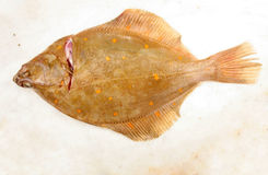 Plaice. Flat fish on a marble slab Royalty Free Stock Image