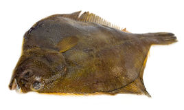 Plaice Stock Photos