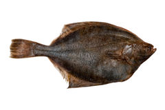 Plaice fish Stock Photo