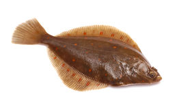 Plaice Fish Royalty Free Stock Photography