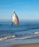 Plaice on fishing rod. With blue sea on background Stock Photos