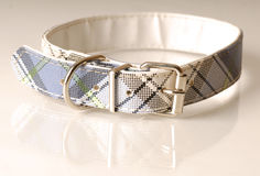 Plaid dog collar Royalty Free Stock Image
