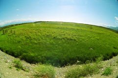 Plain. Beautiful Siberian plain. Fisheye view Stock Photography
