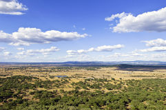 Plain. Endless plain with trees, Portugal Stock Photos