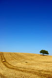 Plain of the Alentejo. Typical landscape of the Plain of the Alentejo, with vast opened fields, of wheat, with some dispersed trees for the immense region royalty free stock images