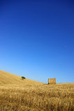Plain of the Alentejo. Typical landscape of the Plain of the Alentejo, with vast opened fields, of wheat, with some dispersed trees for the immense region royalty free stock photos