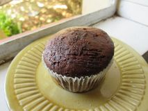 A Plain Brown Muffin In A Cup. Royalty Free Stock Photo