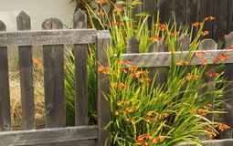Plain and Colorful Fence Stock Photos