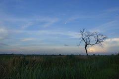 Plain field Stock Photo