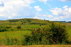 Plain with grains in the harvesting time. In summer days. Green landscape Stock Images